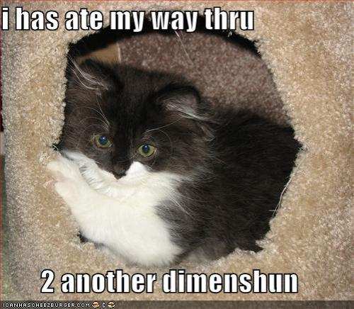 Cat claims new dimension